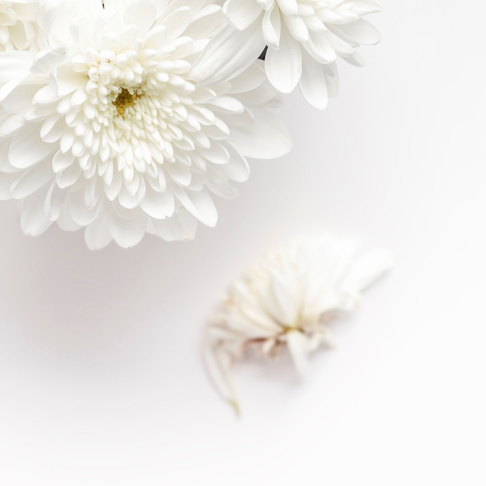 whiteflower-3.jpg