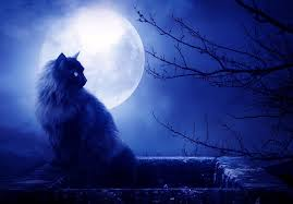cat full blue moon.jpeg