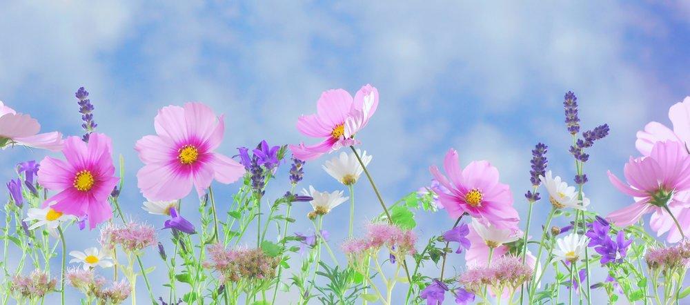 pretty pink flowers.jpg