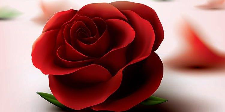 Debbie's Rose.jpg