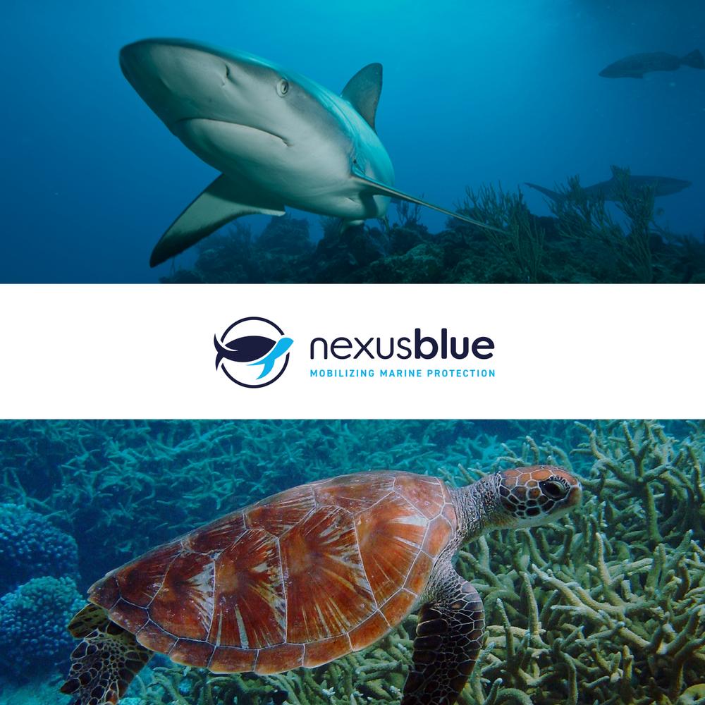 case-study_square-large_nexus-blue.png
