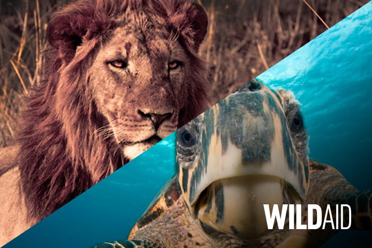 WildAid<strong>Logo Design + Website Design & Development</strong>