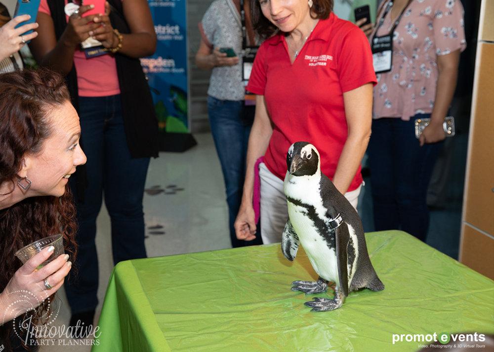 MD Zoo Ambassador_1_Druid Hill Zoo_SYTA Opening Reception_Visit Baltimore_8-24-18.jpg