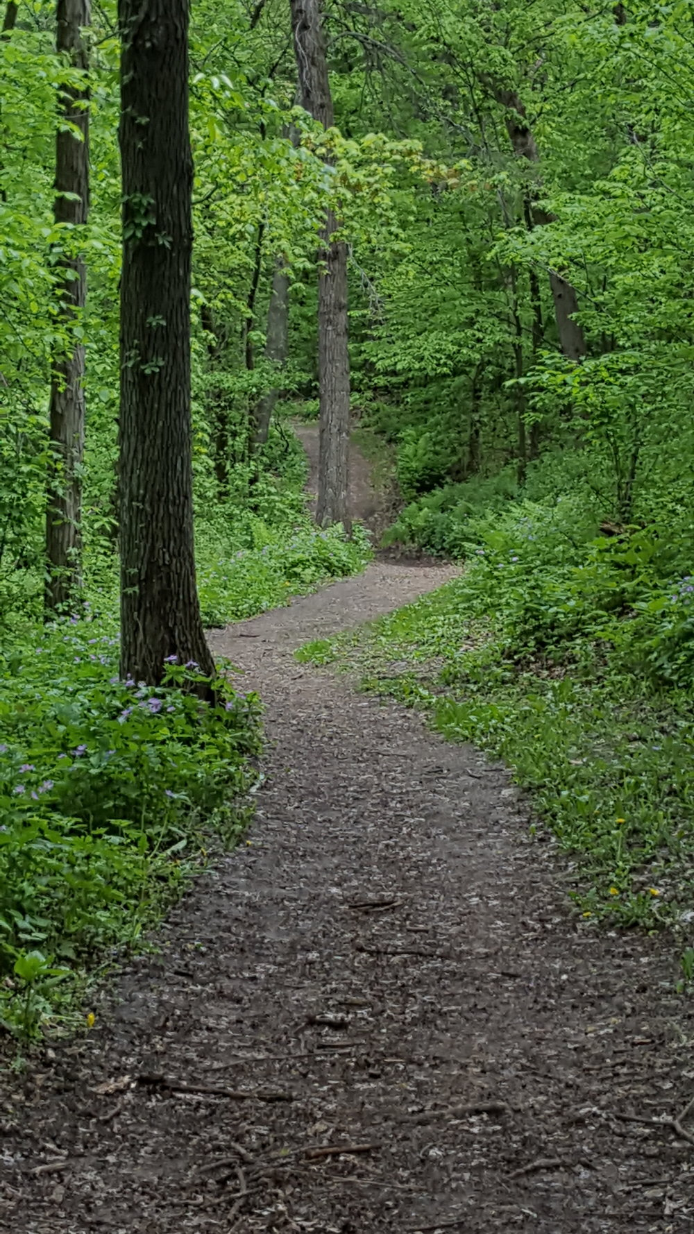 Indian Lake Spring path May 2018.jpg