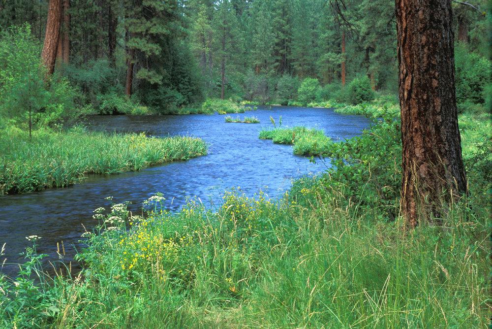 Metolius River.jpg