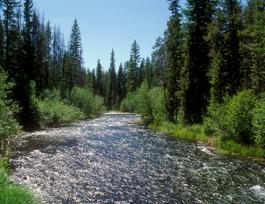 crescent-creek.jpg