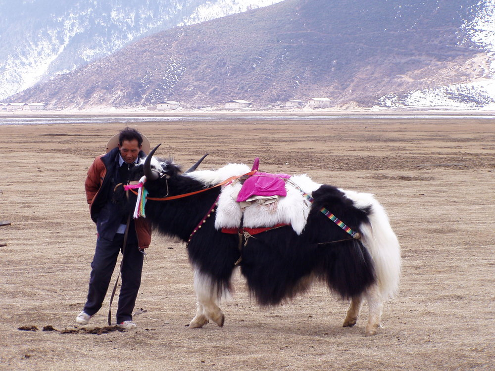 The Tibetan Plateau 6.jpg