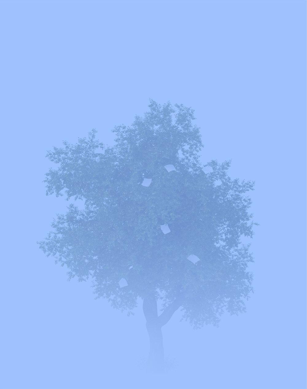 Oak Tree, 2012