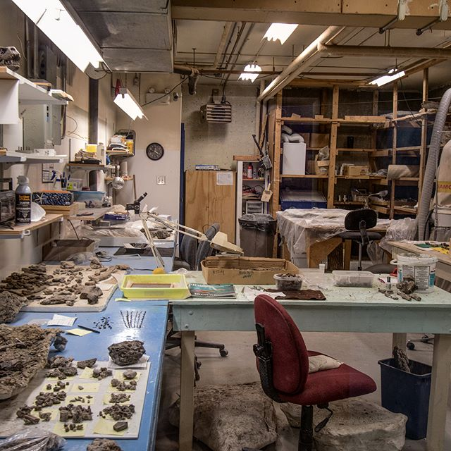 Some behind the scene pictures in @discoverfossils a museum in Morden Manitoba . . . . #dinosaur #palentology #museums #jurrasicpark #exploremb