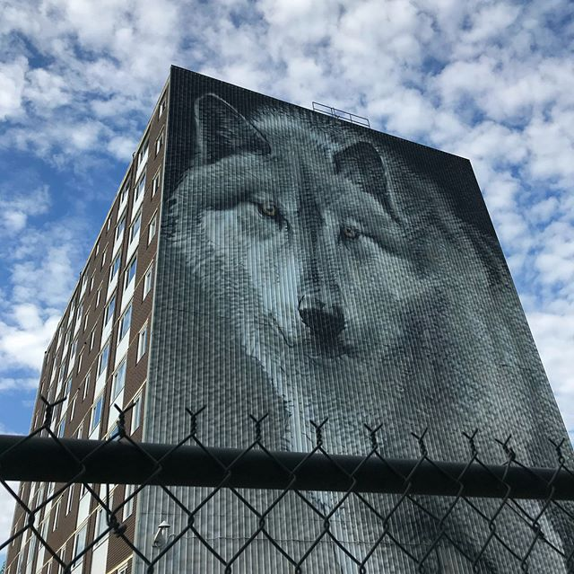 Thompson is full of beautiful street art! Painted wolves, sculptures, and the largest lit mural in the world. There are 17 stops that can be found along the Spirit Way hiking trail. I'm in love! 💚💙 . . . . . #northerntravel #northernmanitoba #streetart #exploremanitoba