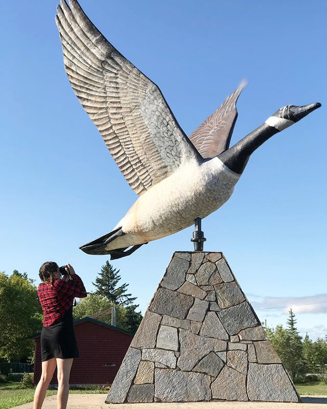 Caution: will stop at every giant statue . . . . . #interlake #roadtrippin #manitoba #giantstatue #canadagoose