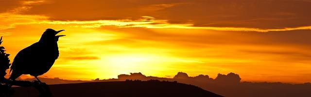 singing sunrise.jpg