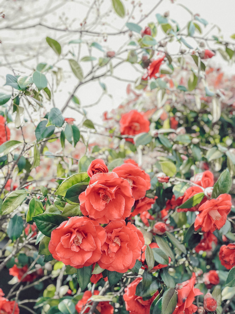 Spring 18 (1 of 1).jpg