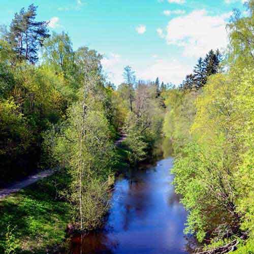 kankaanpuisto-15.jpg