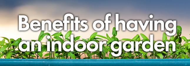 Benefits of indoor Garden.jpg
