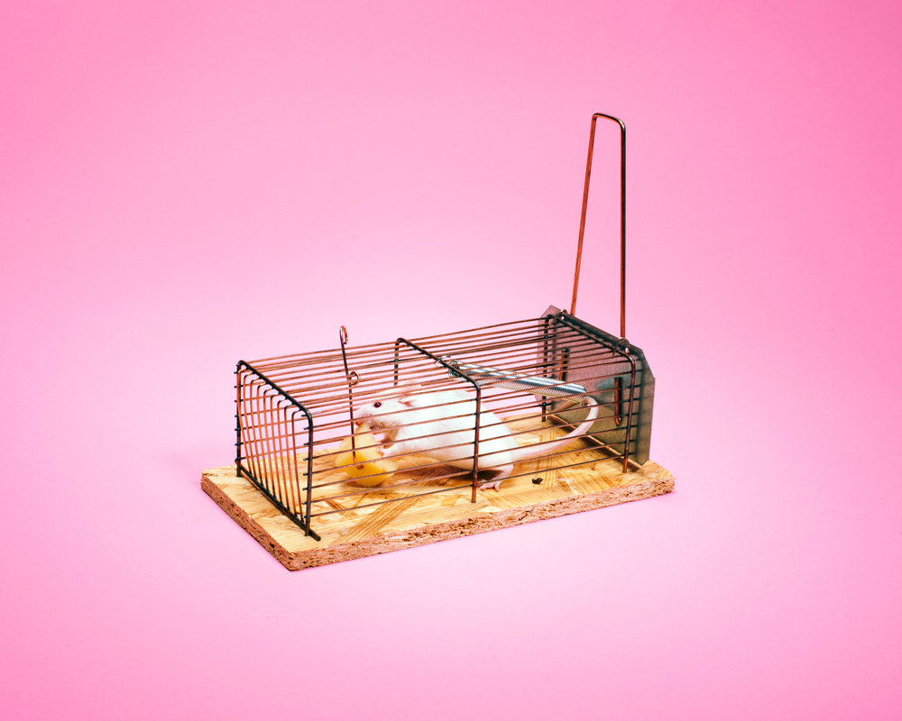 Mouse - FRee