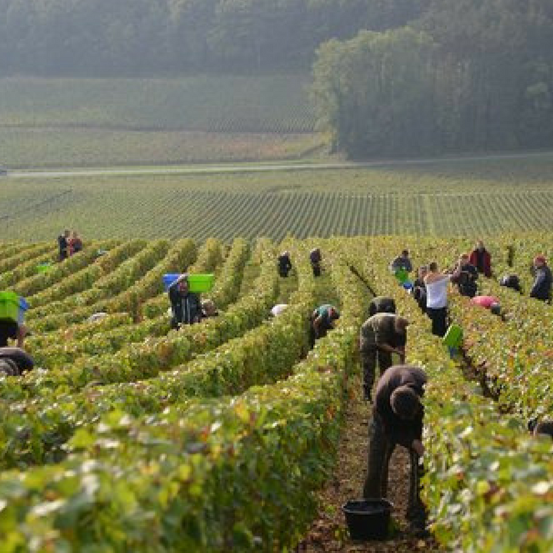 Visit the Grand Cru and Premier Cru vineyards of Gevrey Chambertin -