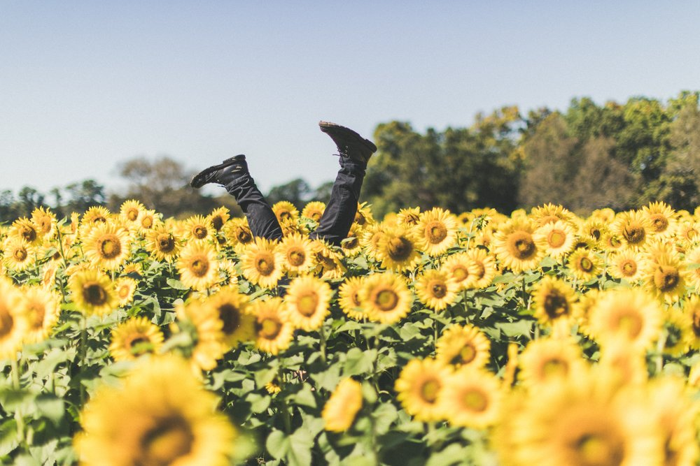 man doing handstand in sunflowers