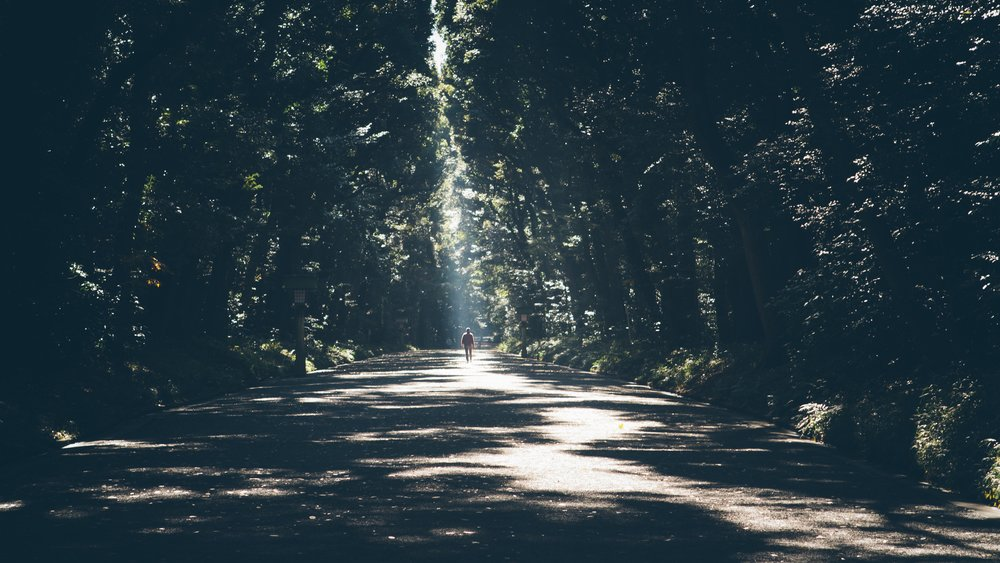 man in distance walking between trees with sunlight streaming through them