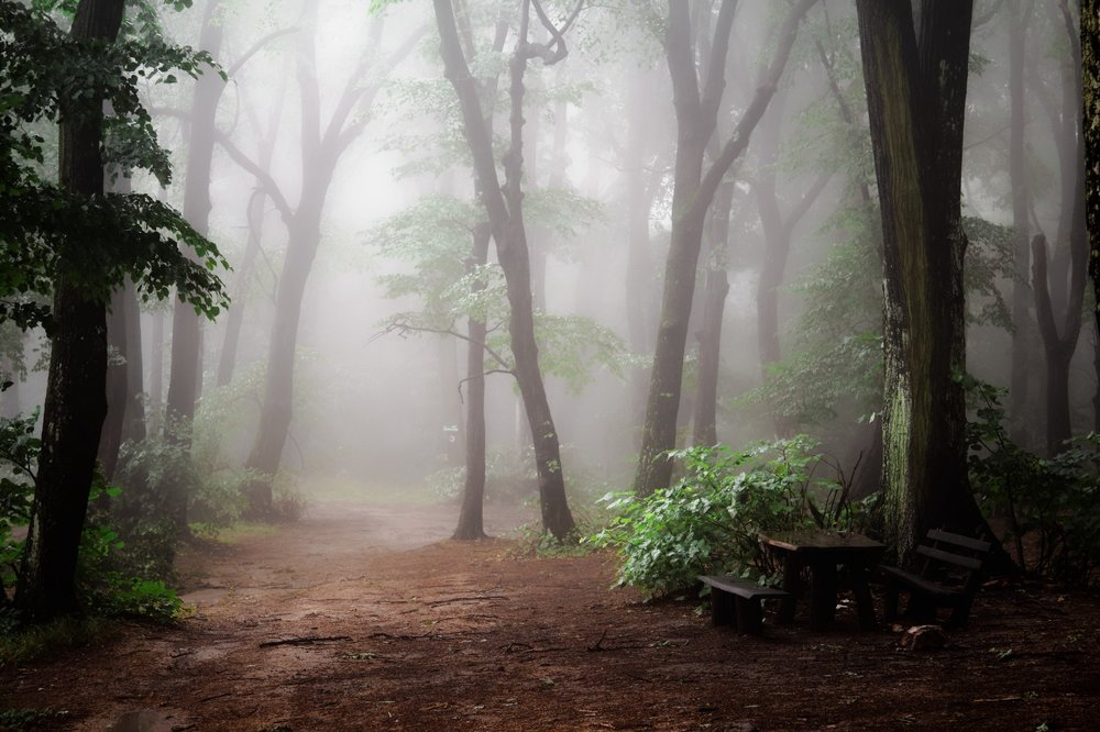a foggy anxious forest scene