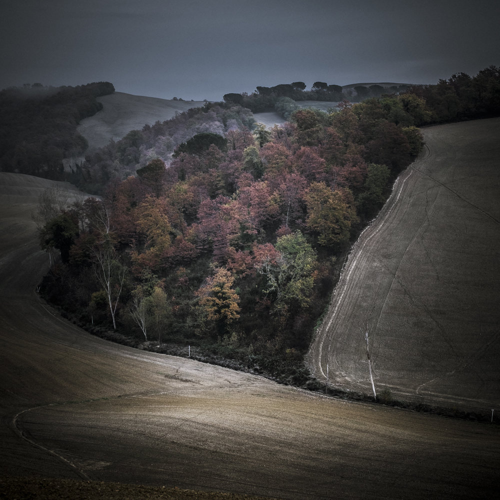 autumn impressions, November 19th 2017.