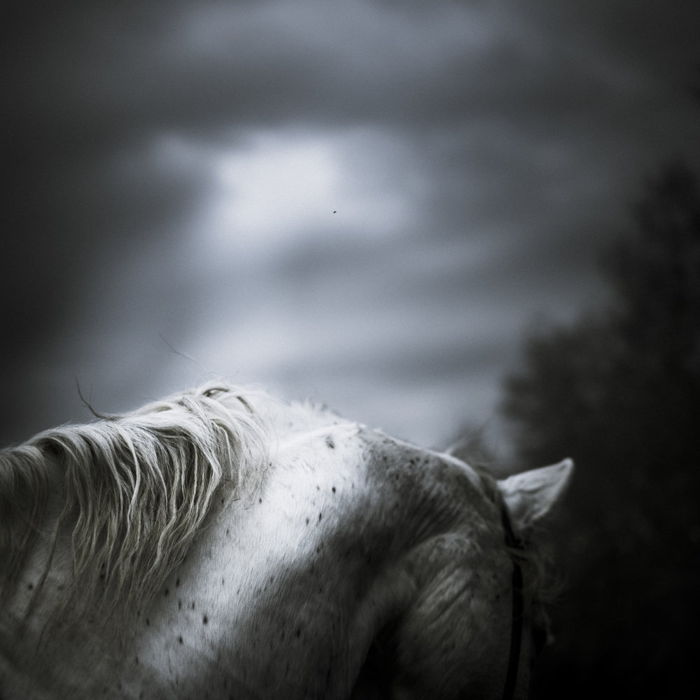 it will be hard to find a horse like him,