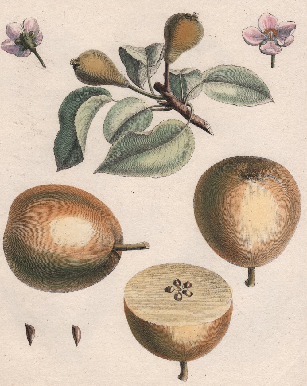 du Monceau, Henri-Louis Duhamel