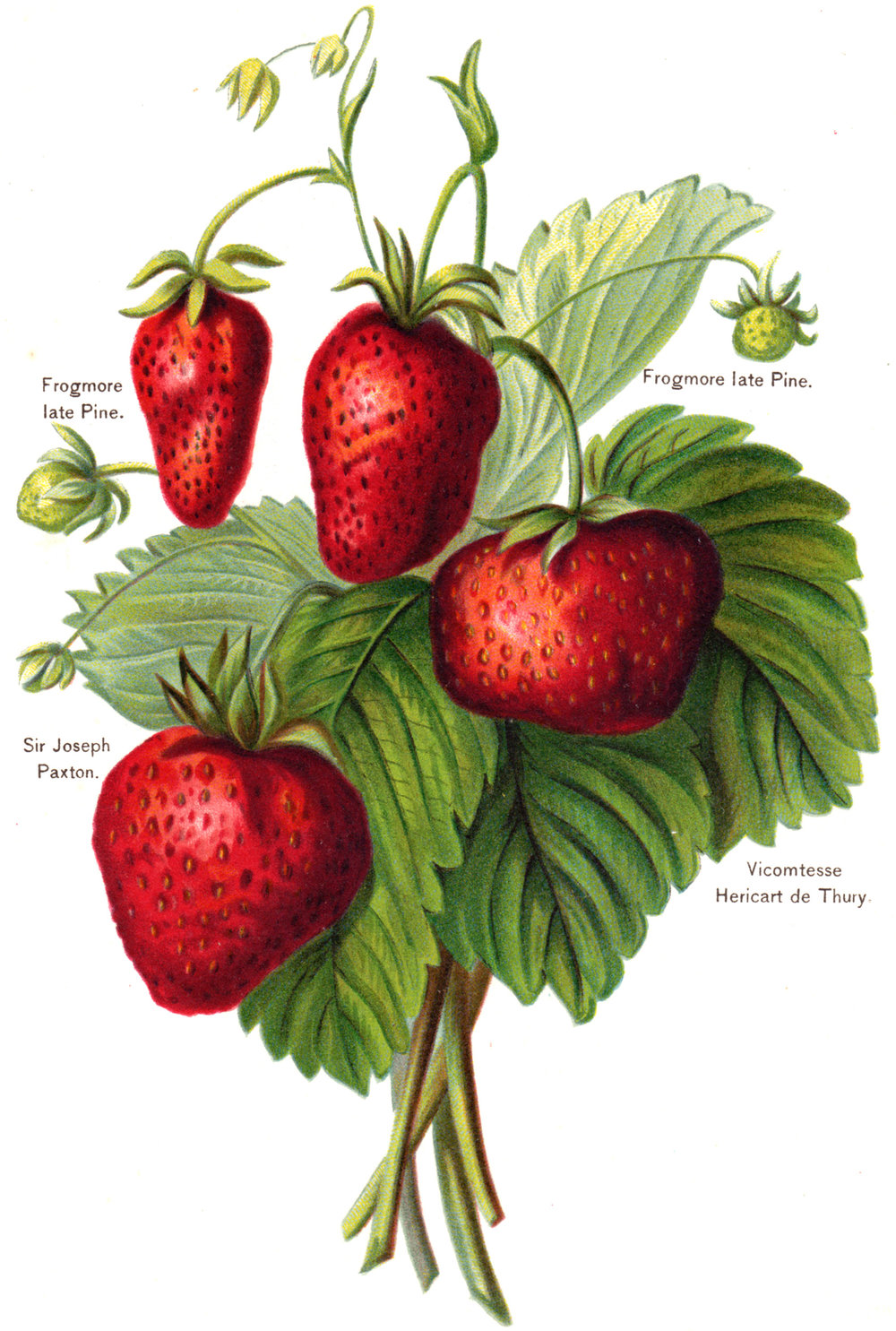 Wright, John / Miss May Rivers – Fruit Grower's Guide 1890s