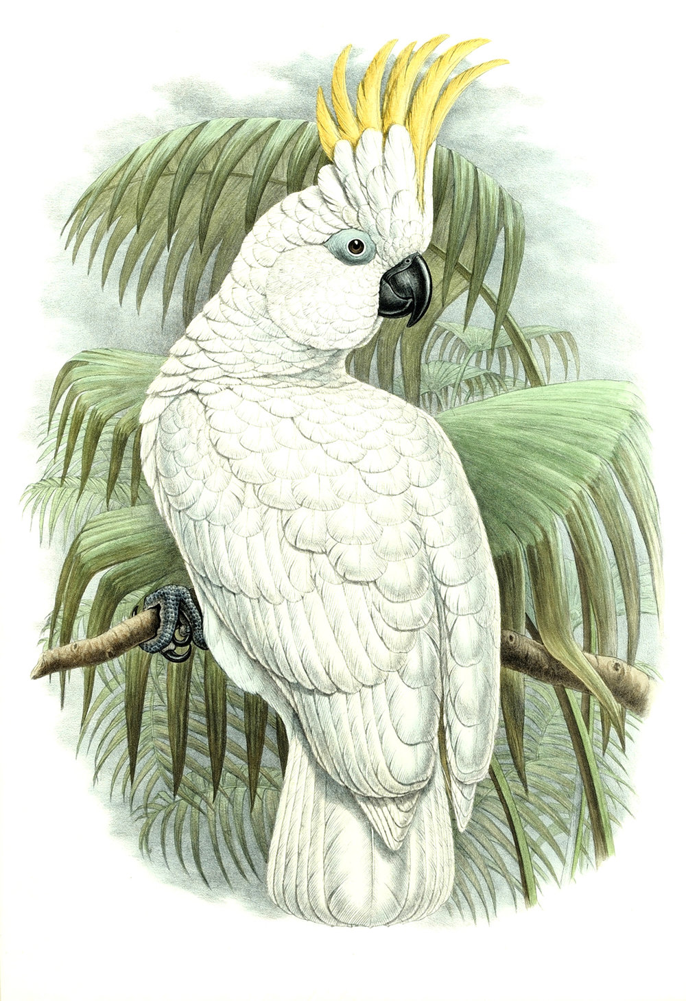 Gould vintage bird prints