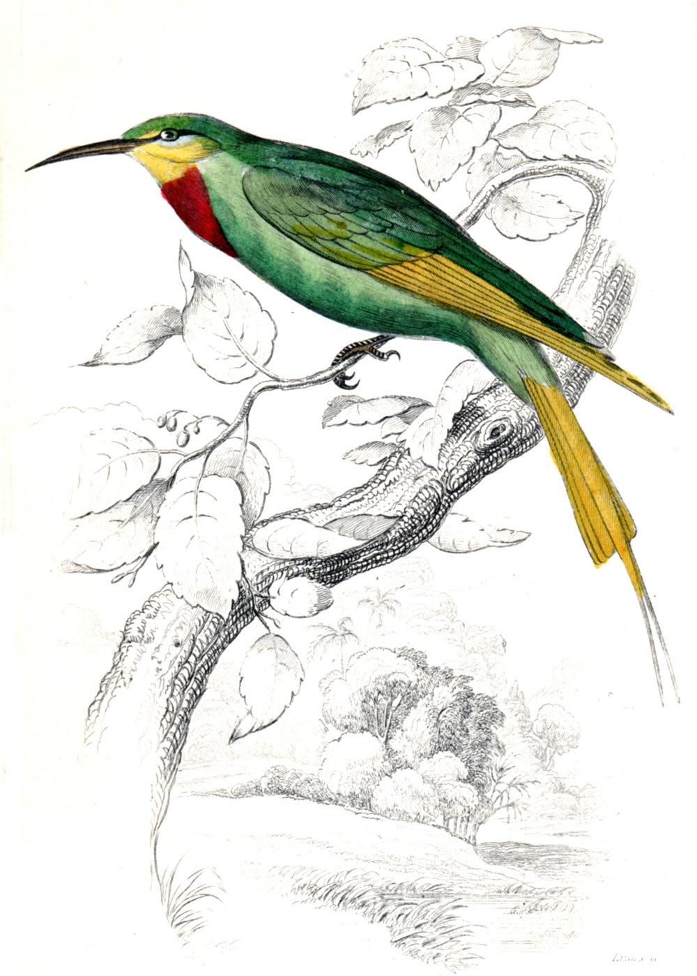 Jardine, Sir Wm / Lizars, Wm – The Naturalist's Miscellany