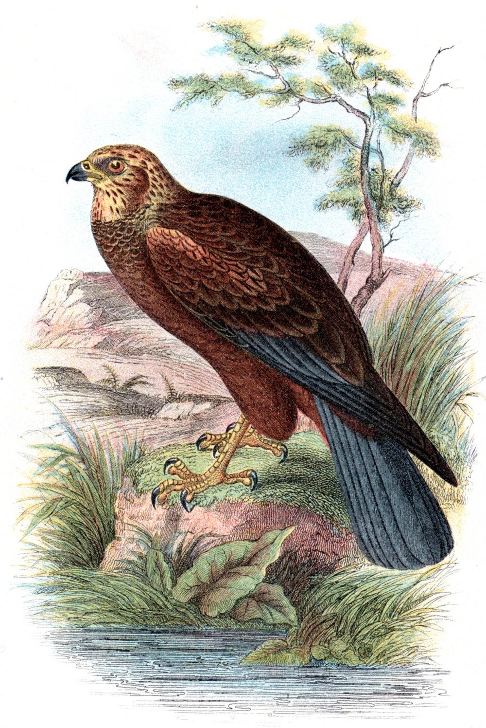 Wyman & Sons / Lloyd's Natural History
