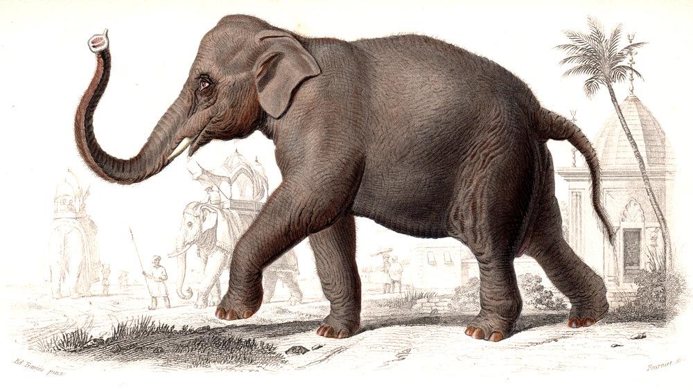 d'Orbigny, Charles –Mammals