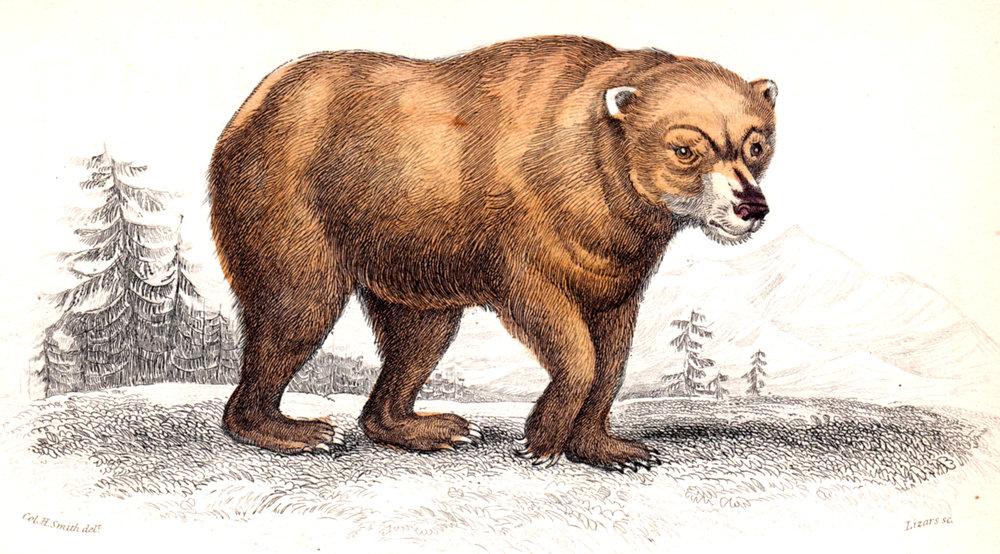 Jardine, Sir Wm / Lizars, Wm – Large Mammals