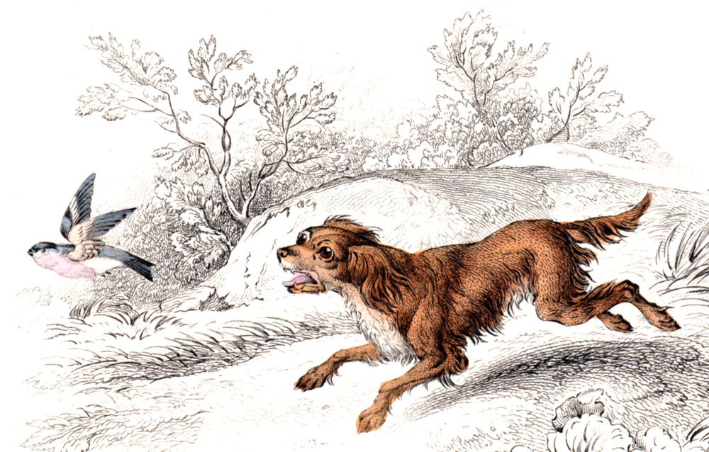 Jardine, Sir Wm / Lizars, Wm – Dogs, domestic
