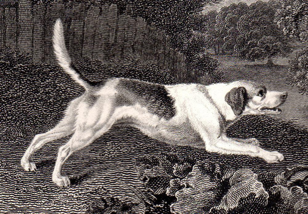 Scott, John –Dogs & Sporting