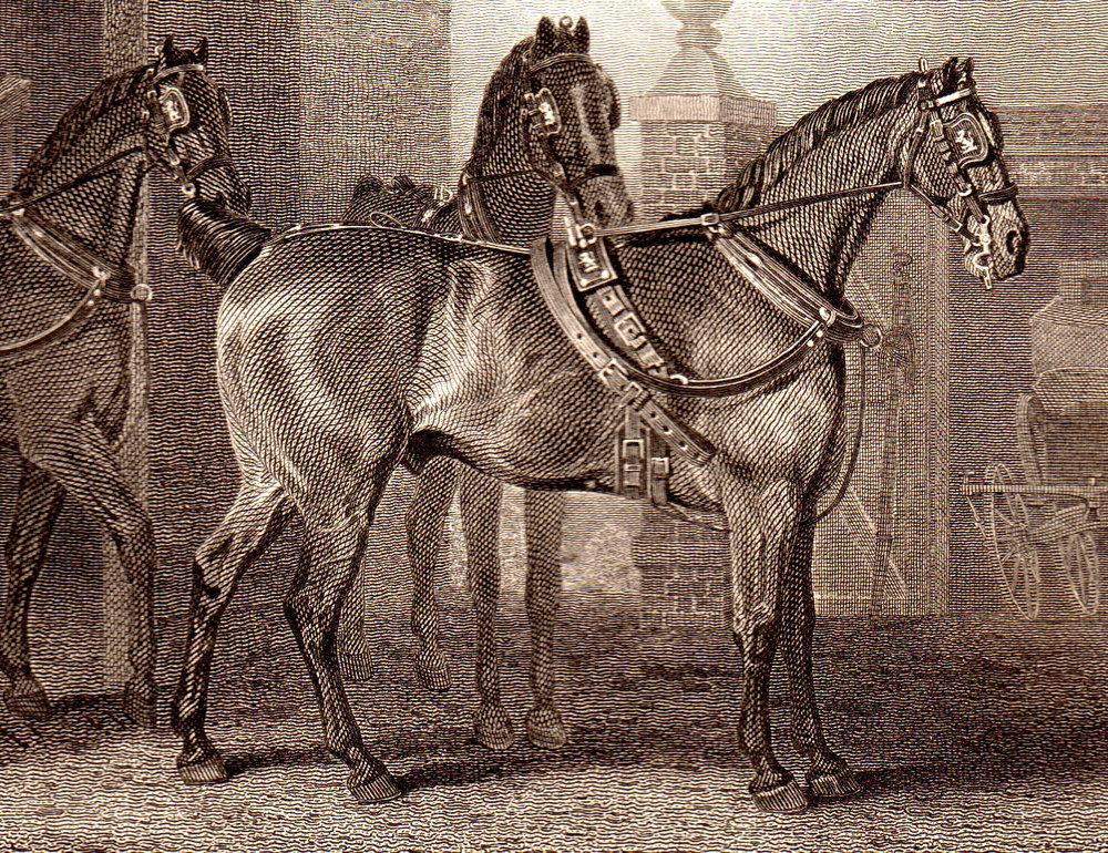 Scott, John –Horses & Sporting
