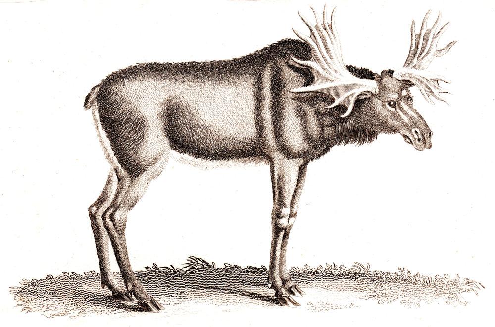 Shaw, George –Mammals