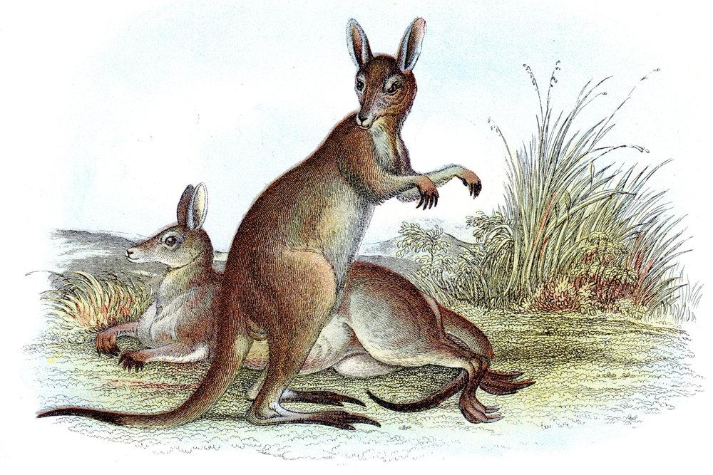Wyman & Sons / Lloyd's Natural History –Marsupials, Bats, Mammals, etc.