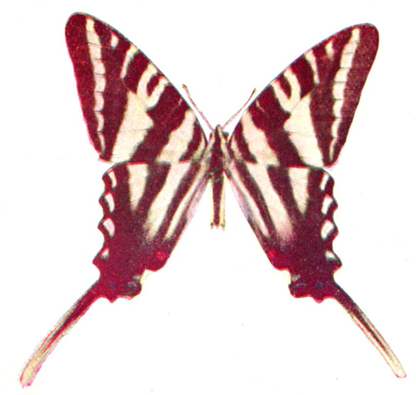 Birds and All Nature – Butterflies