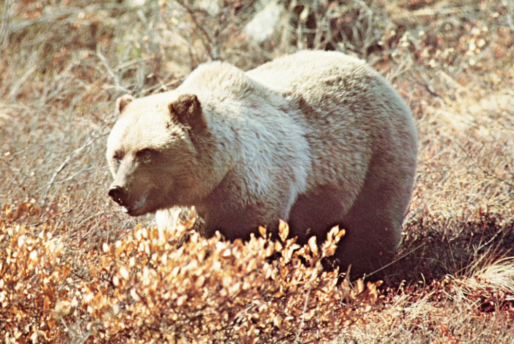 vintage North American wildlife photos