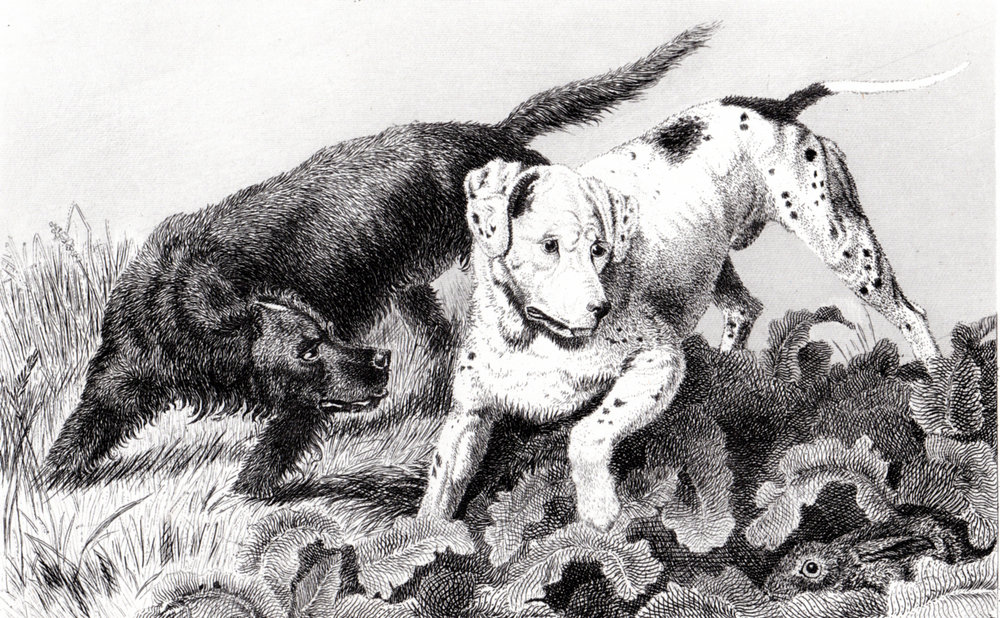 Landseer, Sir Edwin illustrations