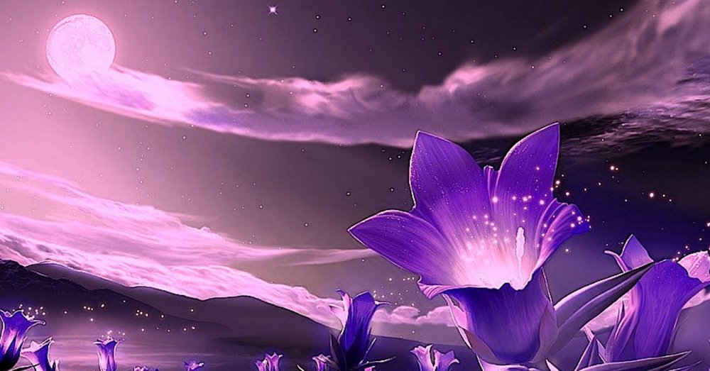 comments-for-fantastic-purple-flowers-hd-wallpaper.jpg