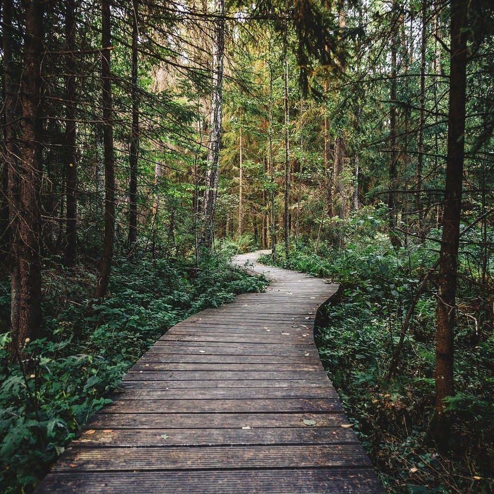 forest-2619496_1920.jpg