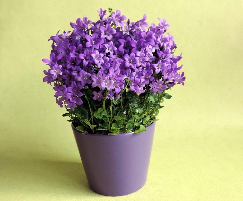 flowers-1291324_1920.jpg