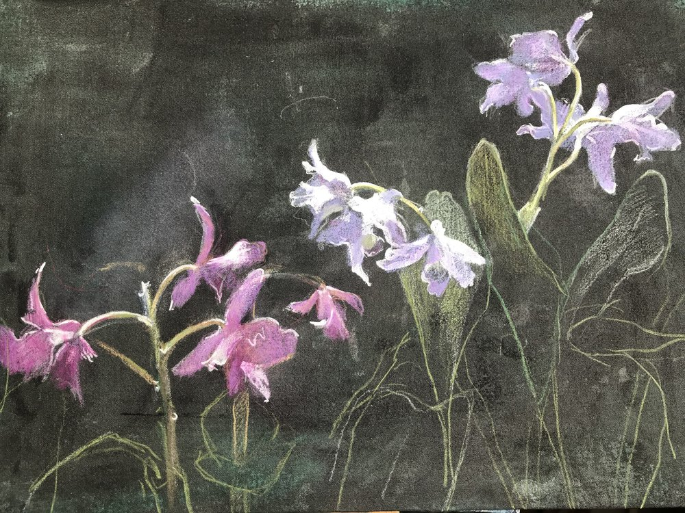 Orchids - 21 x 30cm, coloured pencil and gouache on linen board. Framed £395