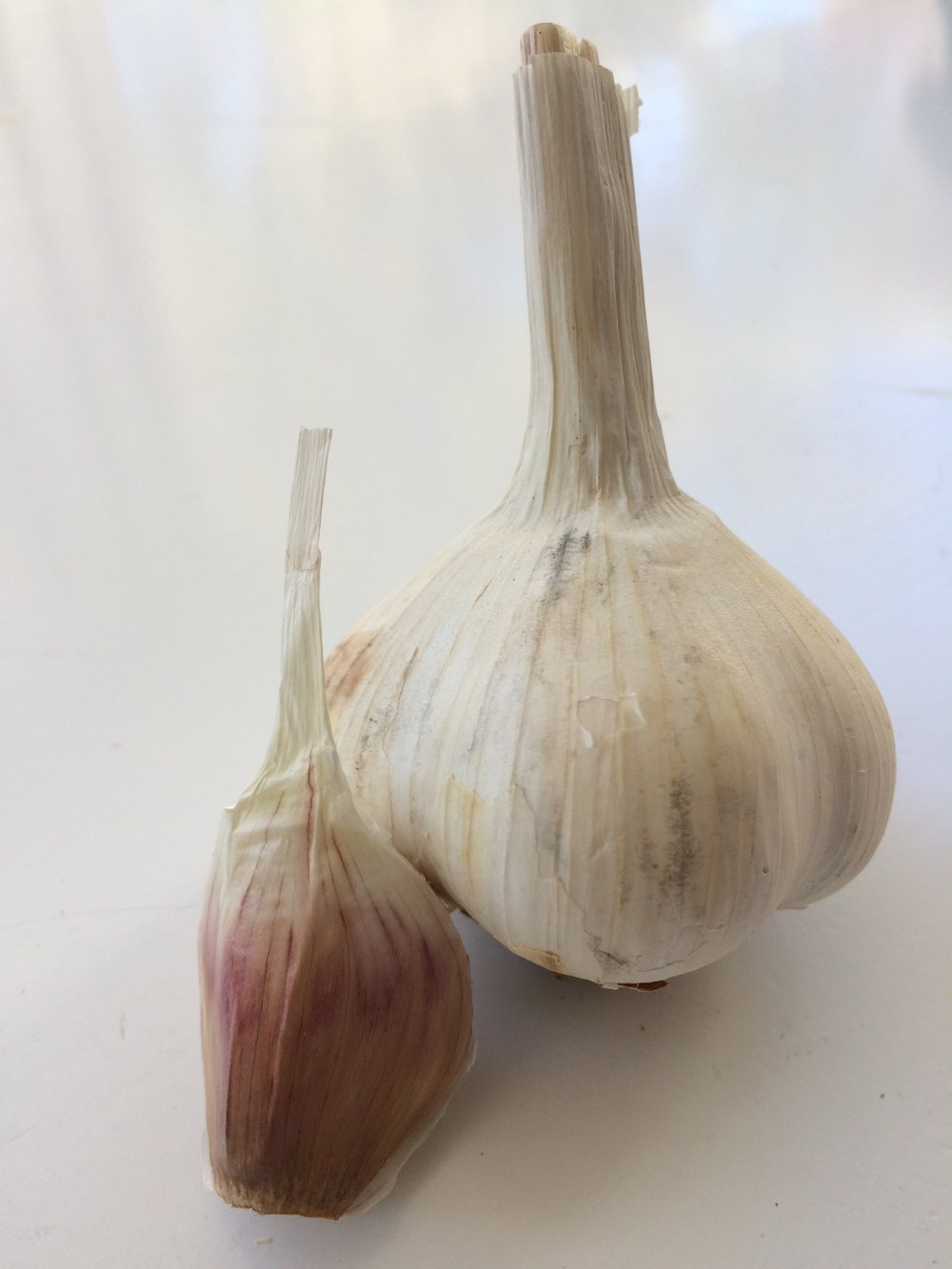 Hardneck garlic and clove.