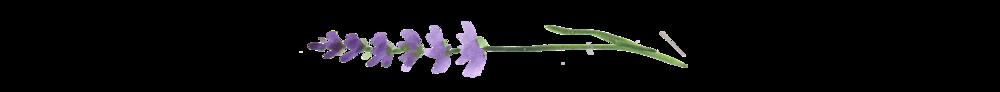 lavender divider.png