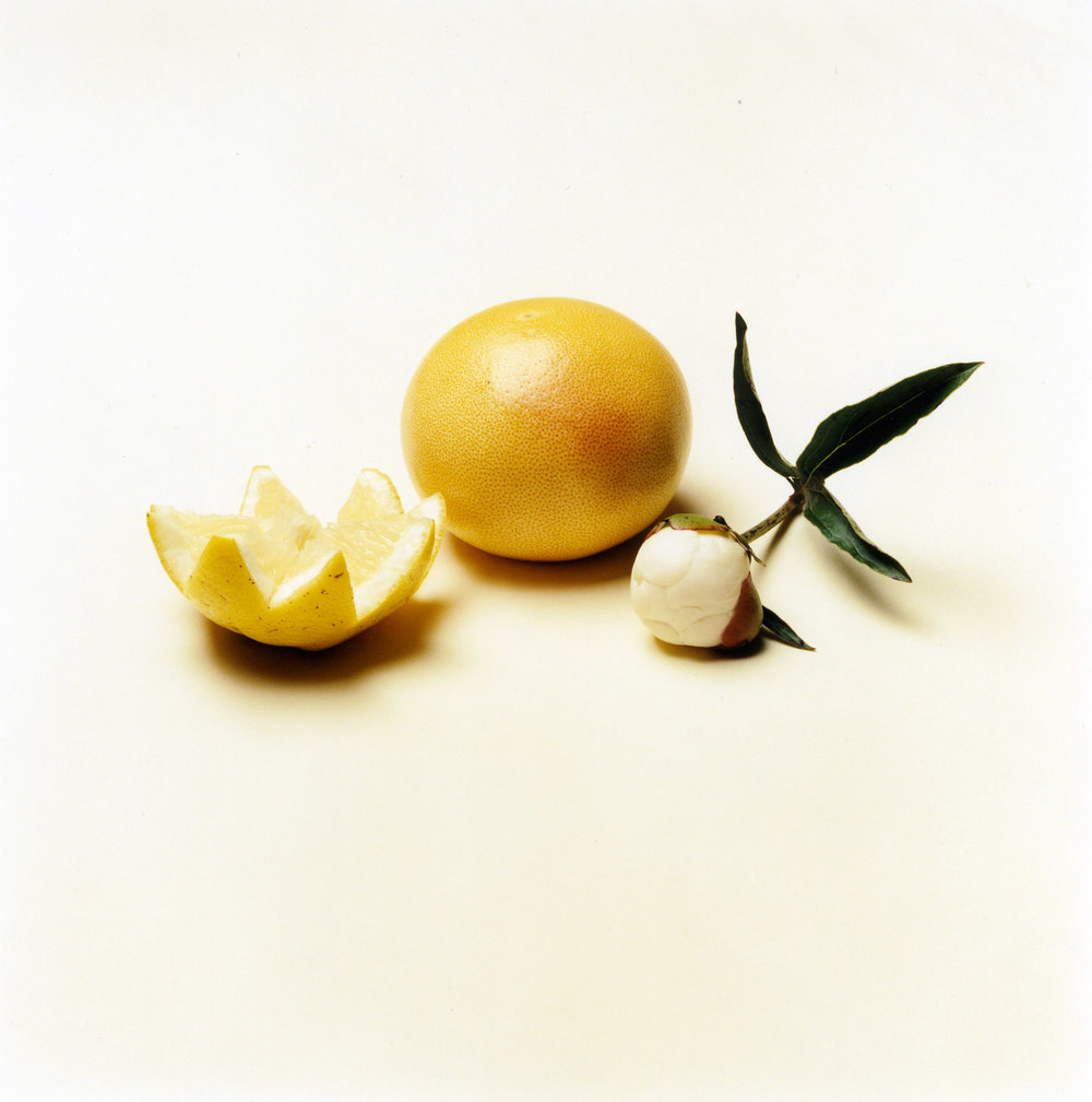 Still Life with Thick Skin   2001, 27″ x 27″, c-print