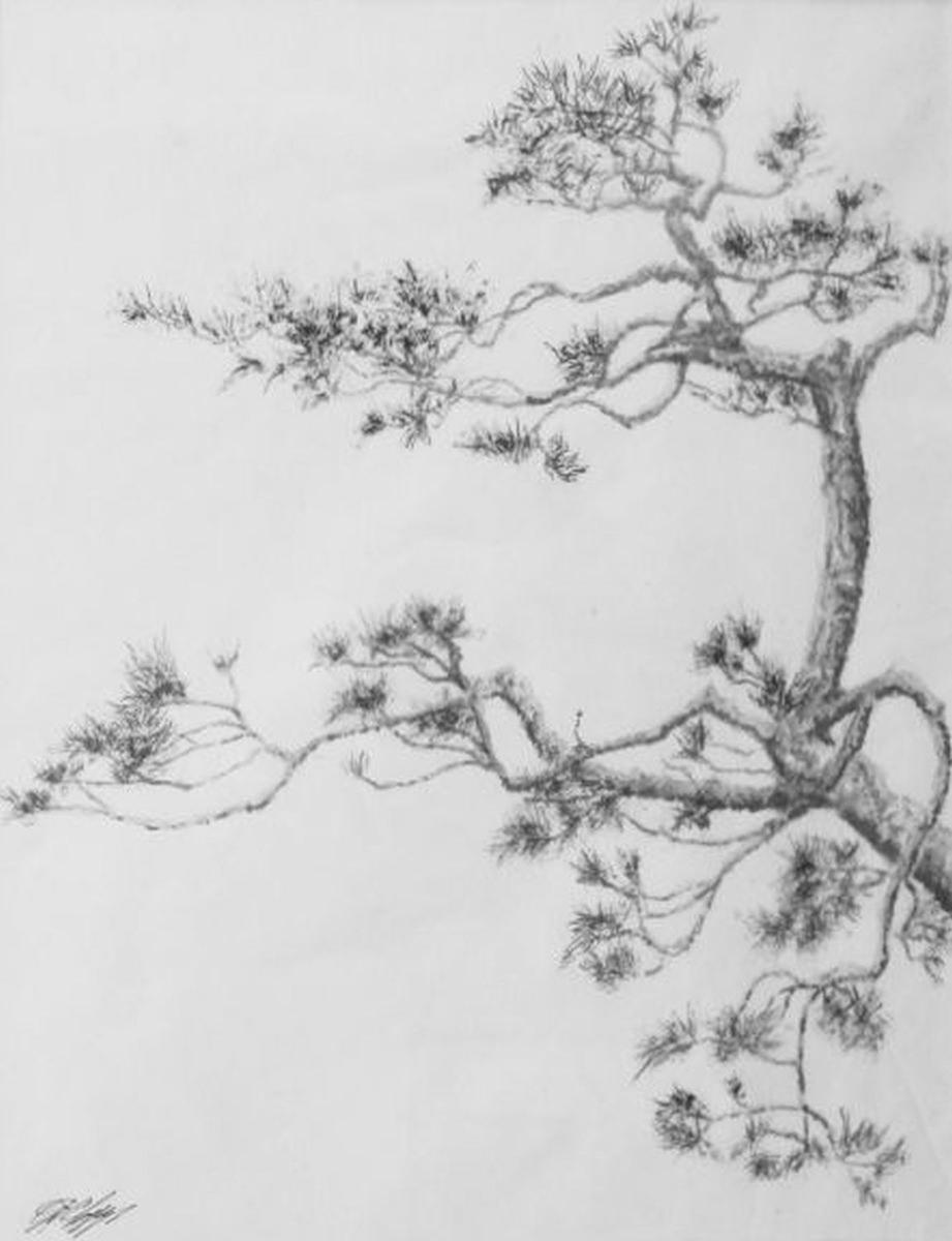 Old Pine III