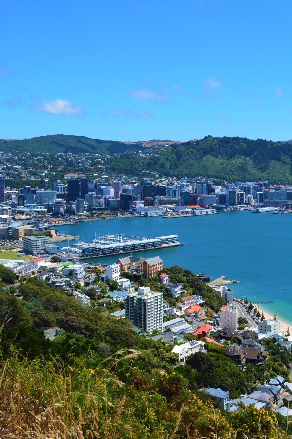 Overlooking Wellington from Mount Victoria view point